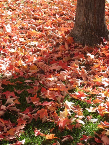 短い紅葉の季節