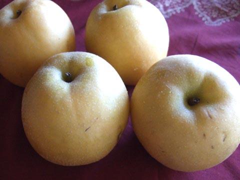 Apple Pear : 梨