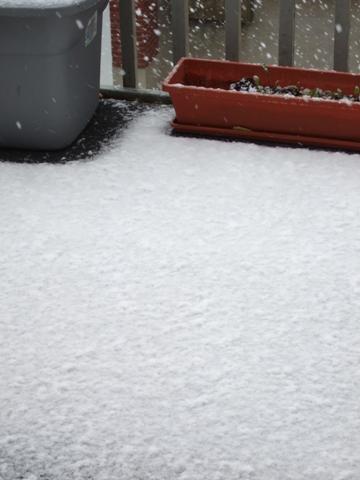 雪が降り出しました
