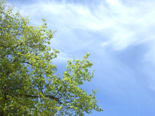 Lovely Spring Sky