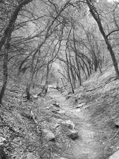 Pipeline Trail - Mill Creek Canyon