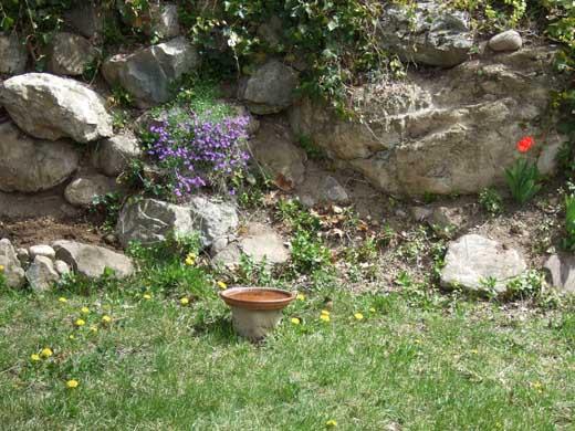 うちの裏庭